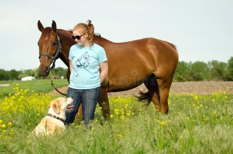 Mulher, cavalo e cão no campo imagens de stock