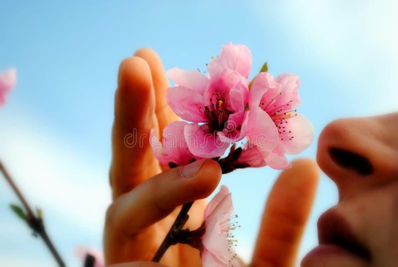 A mulher cheira uma flor do pêssego imagens de stock royalty free