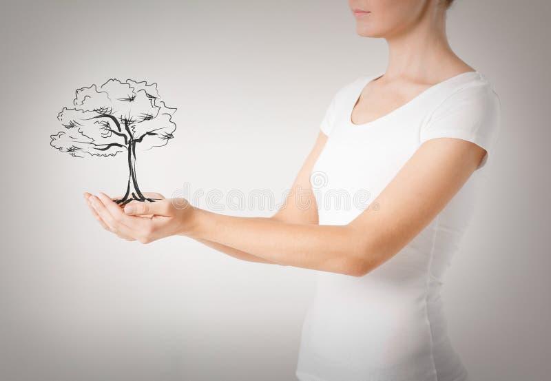 Mulher com a árvore pequena em suas mãos imagem de stock royalty free