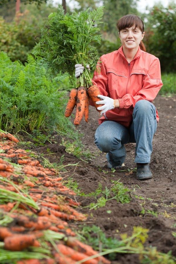 Mulher com colheita da cenoura fotografia de stock
