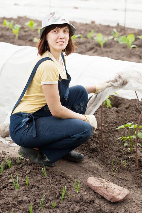 Mulher com os sprouts das pimentas no viveiro foto de stock
