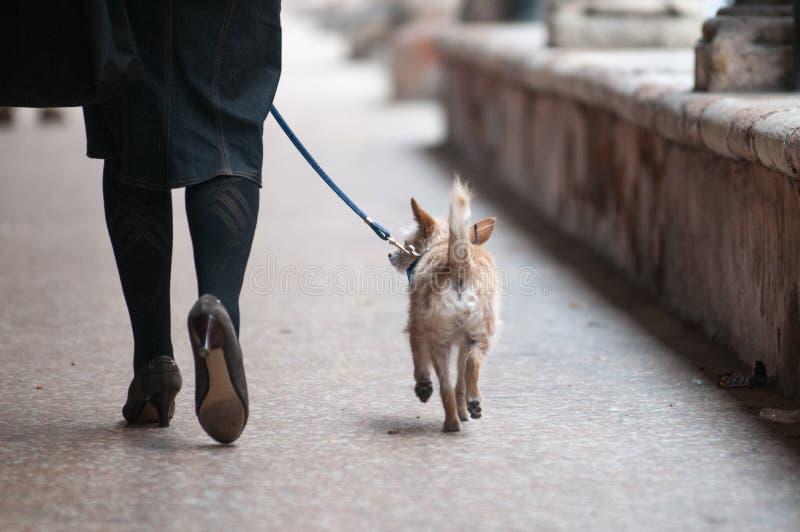 Mulher com um cão em uma trela fotos de stock royalty free