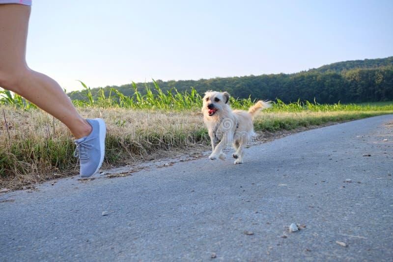 Mulher com um cão que corre abaixo de uma rua do cascalho fotos de stock