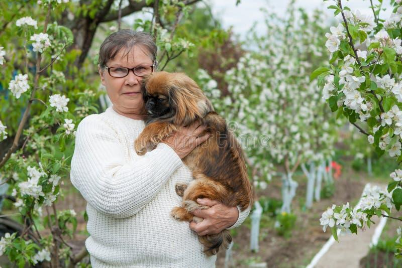 Mulher com um jardim do pequinês do cão na primavera imagem de stock royalty free
