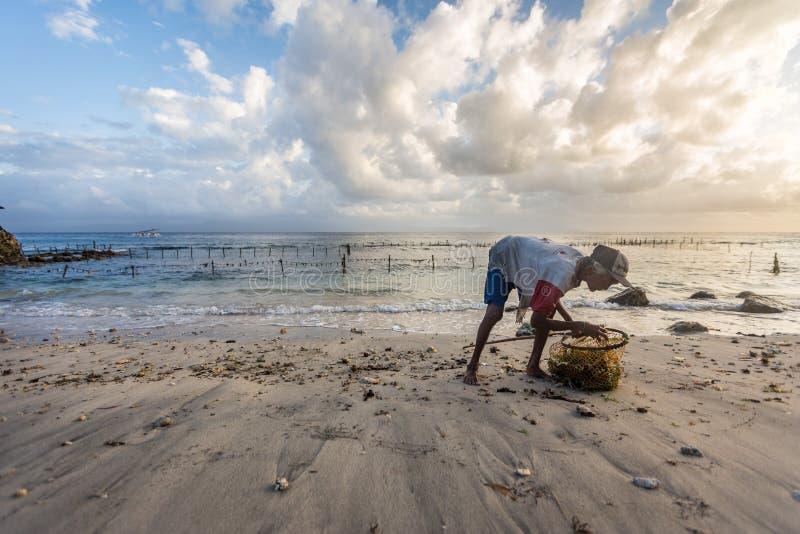 A mulher da vila da pobreza pegara a alga ao longo da praia foto de stock royalty free
