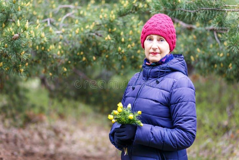 A mulher de cinquenta anos em um revestimento e em um chap?u da pena guarda pr?mulas das flores foto de stock royalty free
