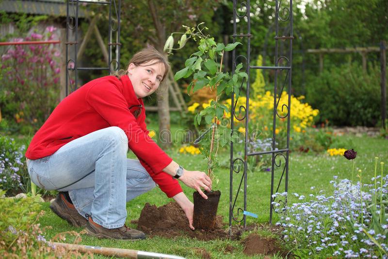 Mulher de jardinagem foto de stock royalty free