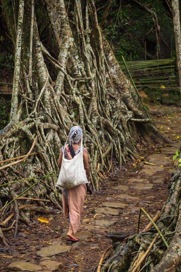 Mulher de Khasi da vila de Riwai que cruza uma da ponte viva famosa das raizes no estado de Meghalaya, Índia imagem de stock royalty free