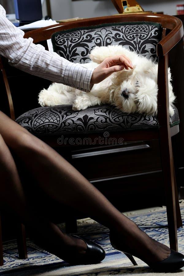 Mulher de negócio e cão bonito fotos de stock