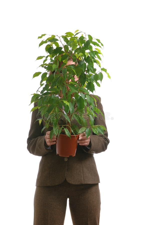 Mulher de negócio que esconde atrás da planta - isolada imagem de stock