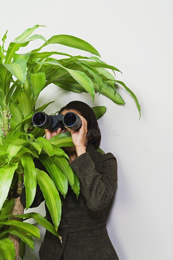 Mulher de negócios que esconde atrás da planta com binóculos fotografia de stock royalty free