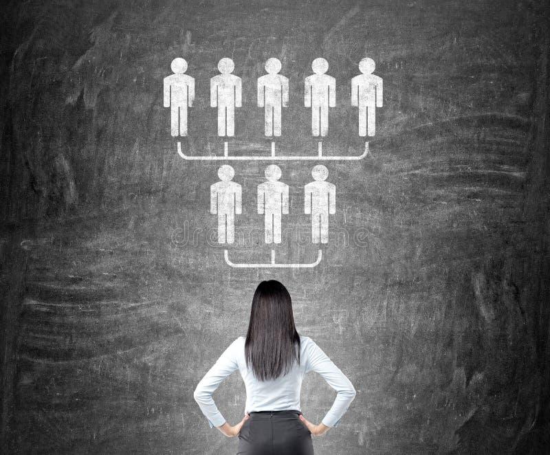 Mulher de negócios que olha o esboço da hierarquia ilustração stock