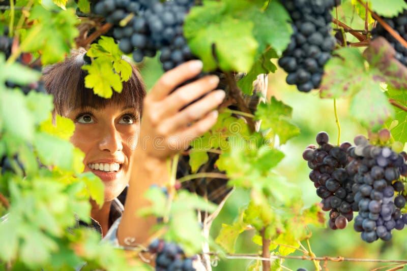 Mulher de sorriso bonita que verifica uvas na videira imagem de stock royalty free