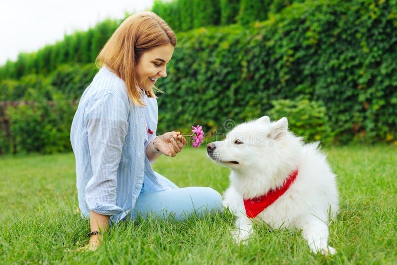 Mulher de sorriso bonito que dá a pouca flor seu cão macio fotografia de stock