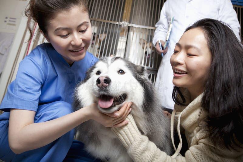 Mulher de sorriso com cão de estimação e veterinário foto de stock