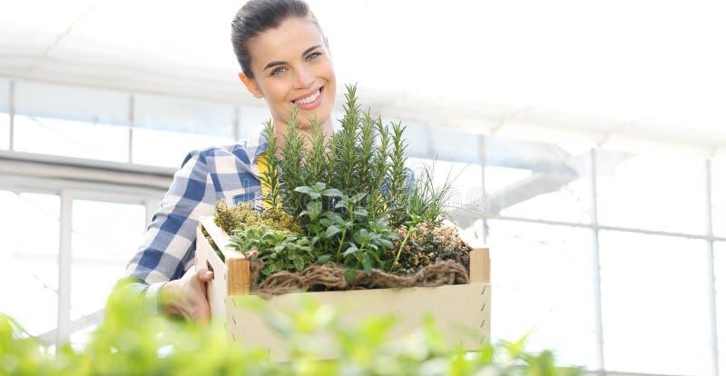 Mulher de sorriso com caixa de madeira completamente de ervas da especiaria no fundo branco, jardim da mola imagem de stock