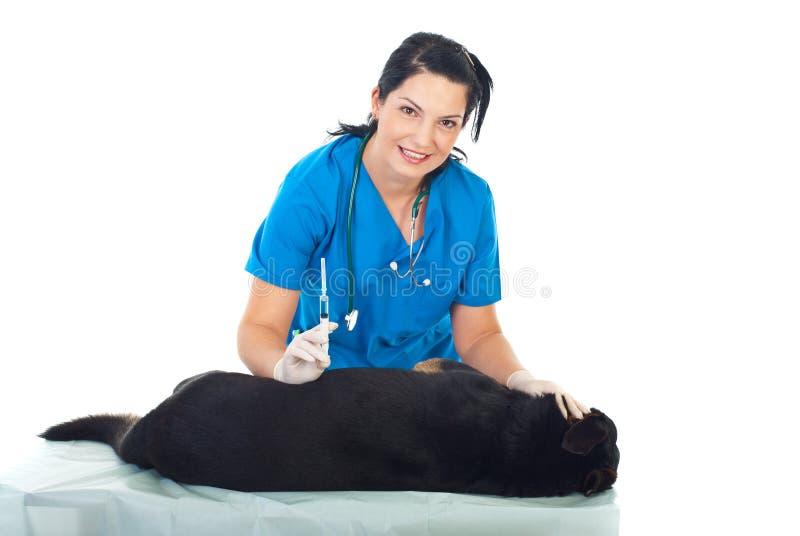 A mulher de sorriso do veterinário injeta o cão imagens de stock