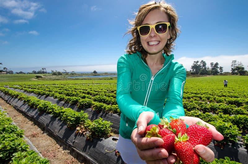 Mulher de sorriso que escolhe morangos em um campo em uma exploração agrícola, guardando um grupo de bagas maduras em sua mão imagem de stock