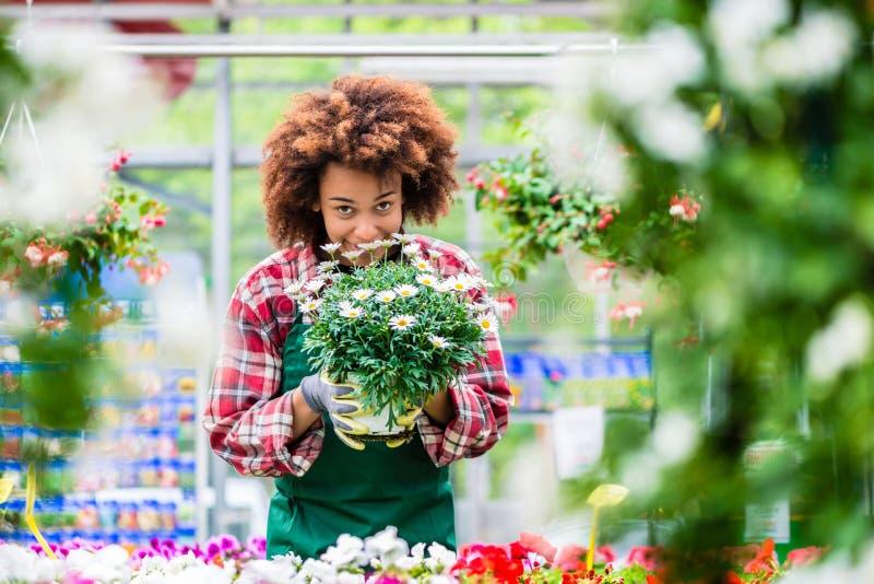 Mulher dedicada que guarda uma planta em pasta durante o trabalho como o florista foto de stock