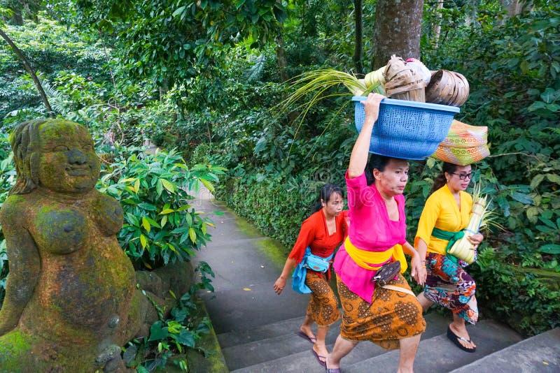 A mulher do Balinese que leva ofertas para o ritual hindu diário é uma tradição, floresta do macaco, Bali, Indonésia, 10 08 2018 fotos de stock