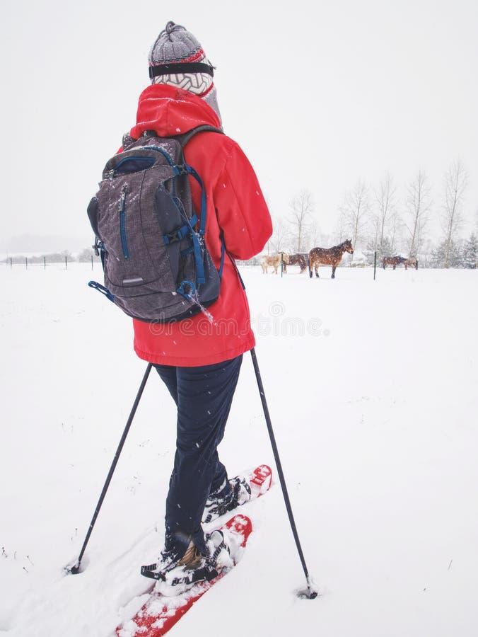 A mulher do corpo de esporte está caminhando na exploração agrícola do cavalo com sapatos de neve imagens de stock royalty free