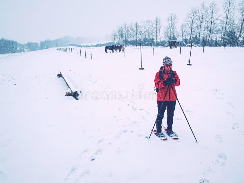 A mulher do corpo de esporte está caminhando na exploração agrícola do cavalo com sapatos de neve fotos de stock