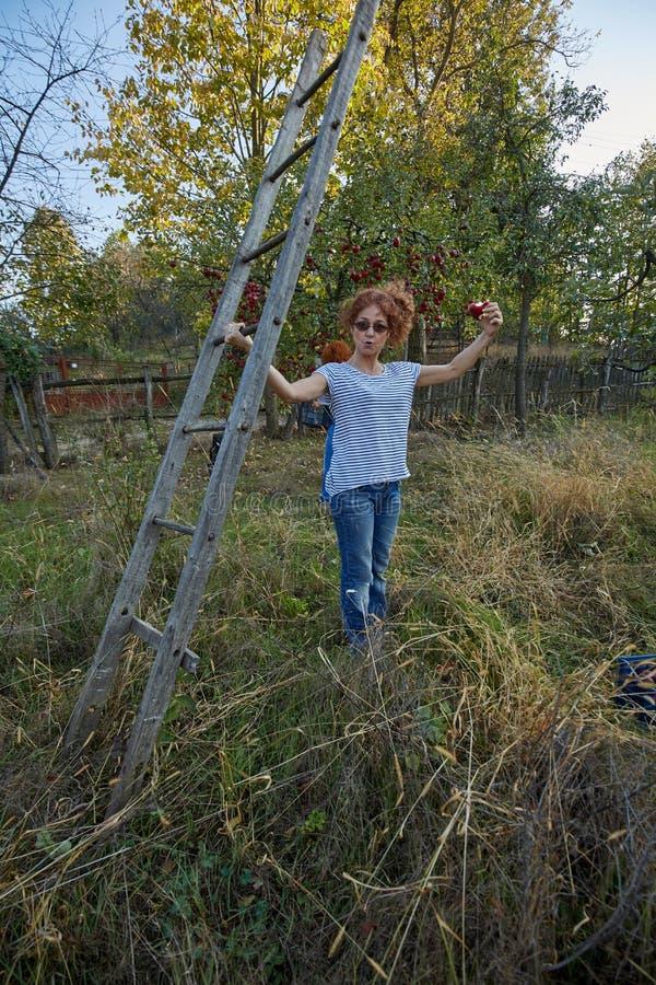 Mulher do fazendeiro com uma escada no pomar imagem de stock