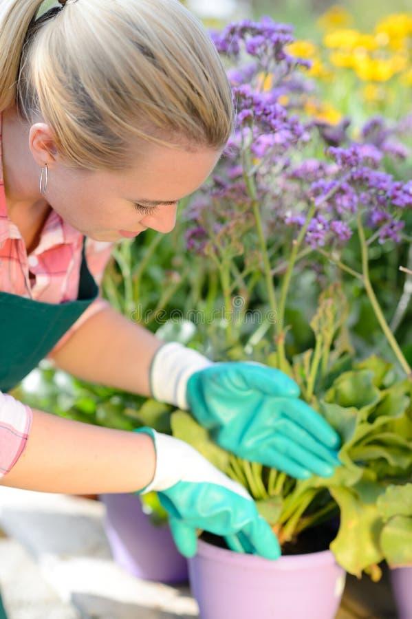 Mulher do Garden Center que planta flores em pasta roxas foto de stock royalty free