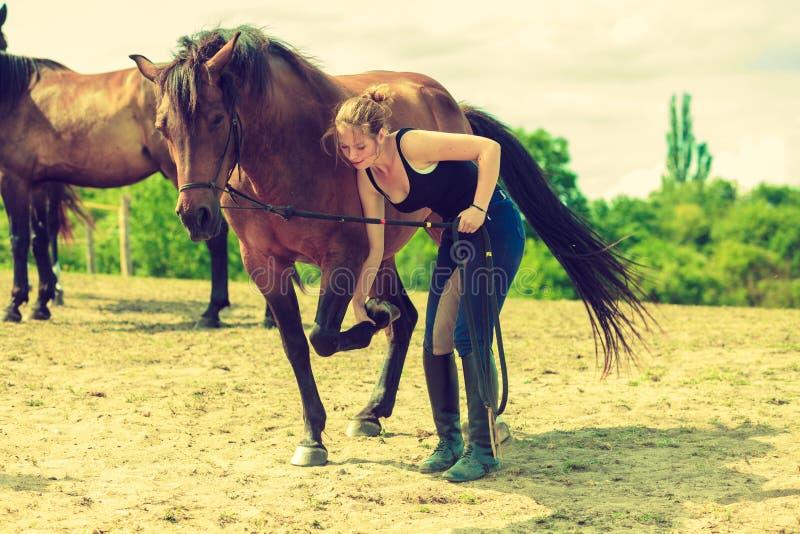 Mulher do jóquei que toma do cavalo foto de stock royalty free