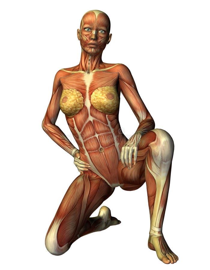 Mulher do músculo em um joelho ilustração do vetor
