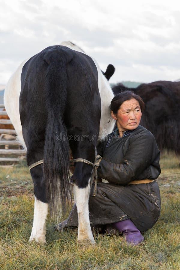 Mulher do Mongolian que ordenha um iaque em Mongólia do norte imagens de stock royalty free