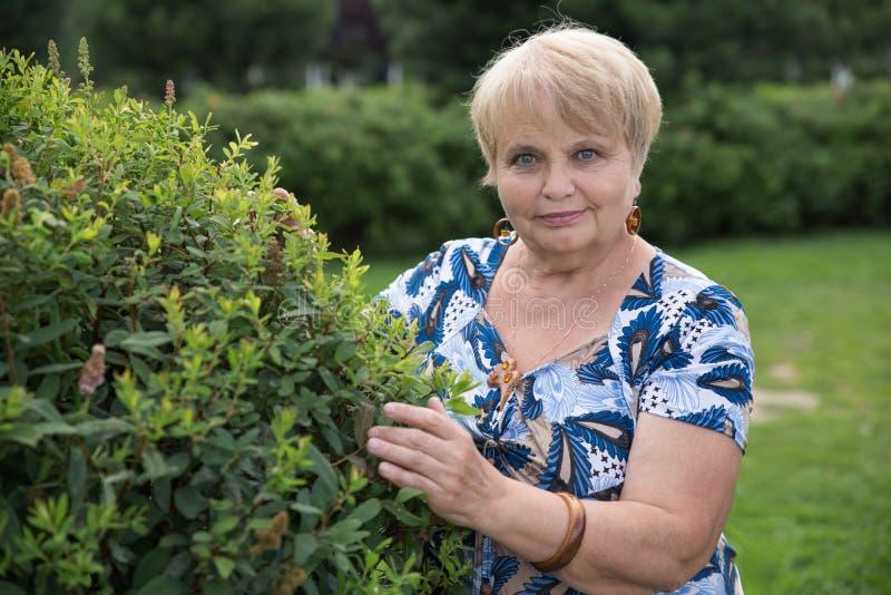 Mulher do pensionista com o arbusto verde no jardim fotos de stock