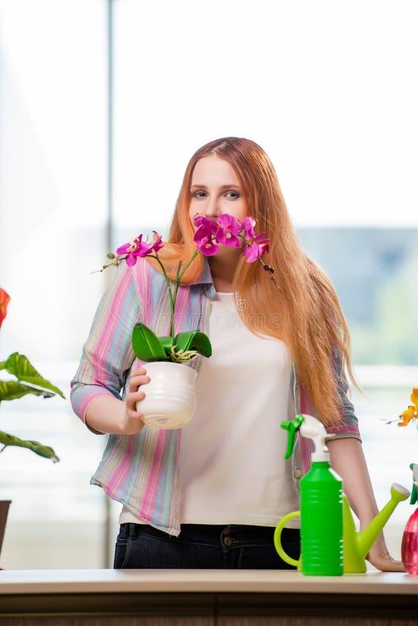 A mulher do ruivo que toma das plantas em casa foto de stock royalty free