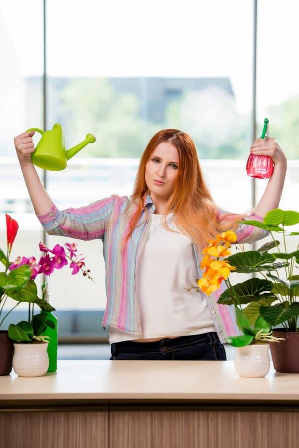 A mulher do ruivo que toma das plantas em casa fotografia de stock