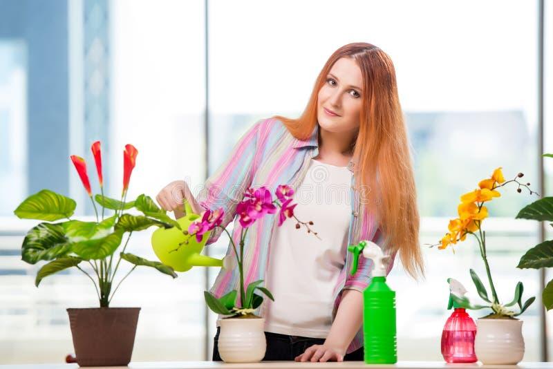 A mulher do ruivo que toma das plantas em casa imagem de stock royalty free