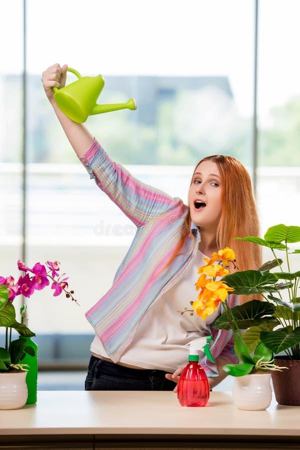 A mulher do ruivo que toma das plantas em casa imagens de stock royalty free