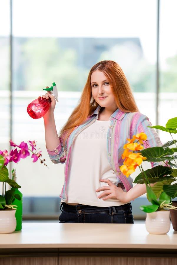 A mulher do ruivo que toma das plantas em casa fotos de stock royalty free