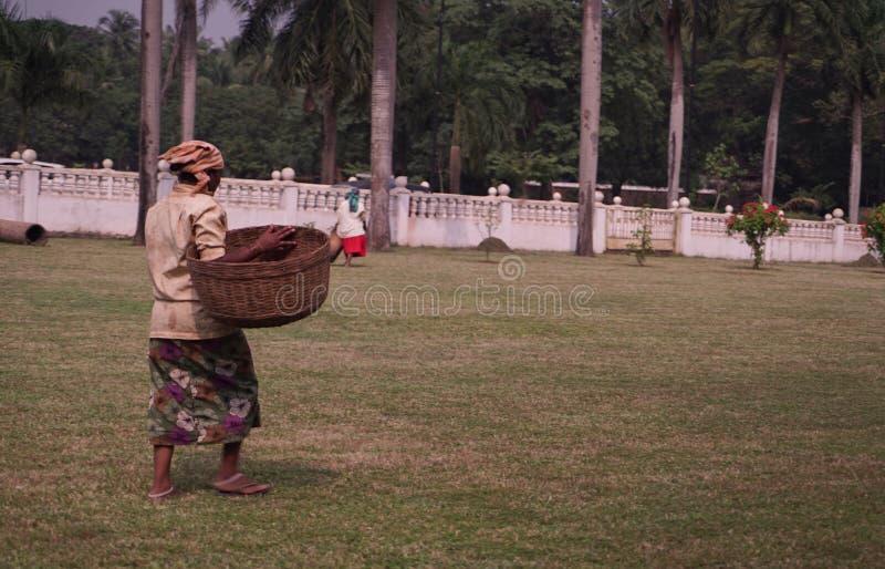Mulher do trabalhador com cesta que anda na grama India fotografia de stock