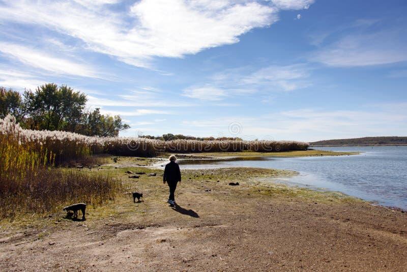 Mulher, dois cães, andando pelo lago foto de stock