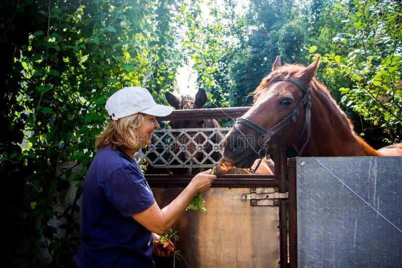 Mulher e cavalo imagens de stock royalty free