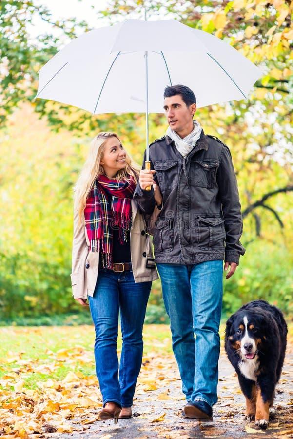 Mulher e homem que têm a caminhada com o cão na chuva do outono fotos de stock