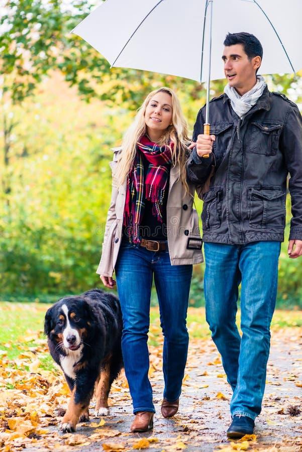 Mulher e homem que têm a caminhada com o cão na chuva do outono imagens de stock royalty free