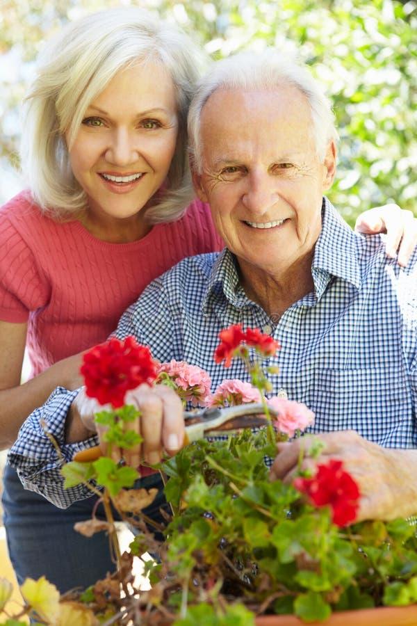 Mulher e pai meados de da idade no jardim fotos de stock royalty free