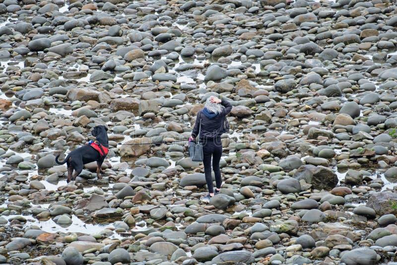 Mulher e seu cão em um Pebble Beach inglês foto de stock