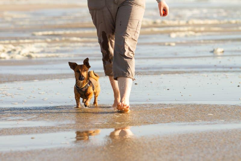 Mulher e seu cão pequeno bonito que andam para colocar saltos na praia fotografia de stock royalty free