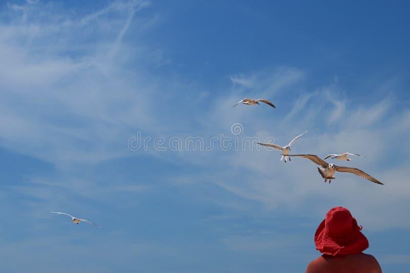 A mulher em um chapéu vermelho e em pássaros de uma gaivota imagem de stock
