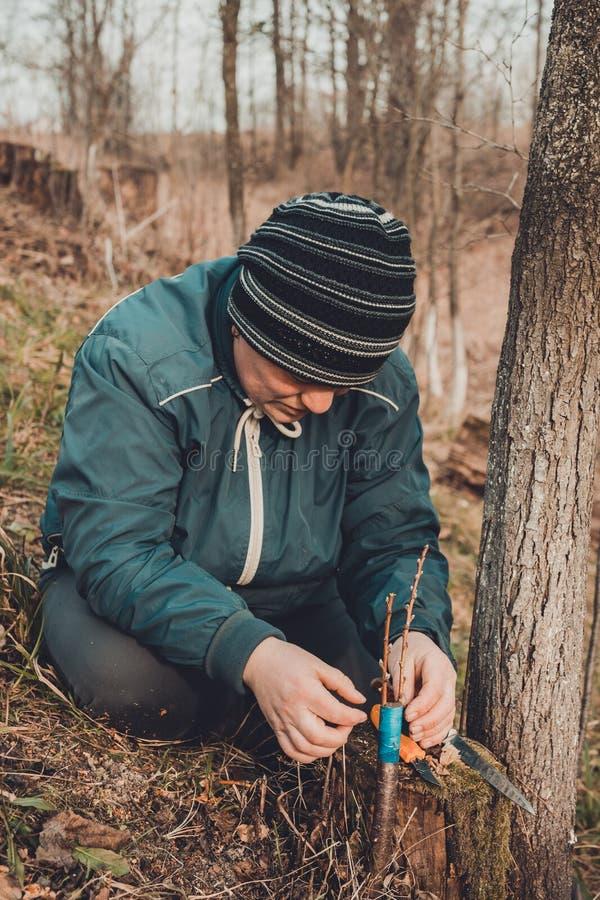 A mulher envolve uma ?rvore do enxerto com uma fita de isolamento no jardim para deter a umidade nela no close-up fotos de stock royalty free