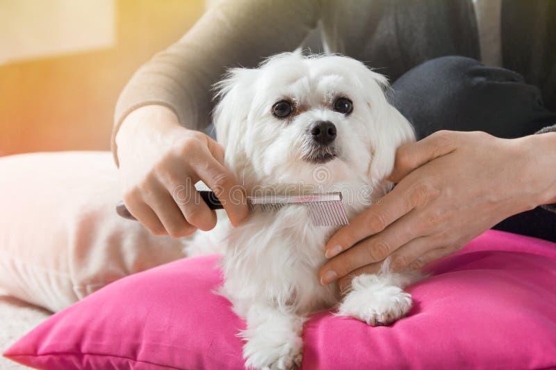 A mulher escova o cabelo de seu cão imagem de stock