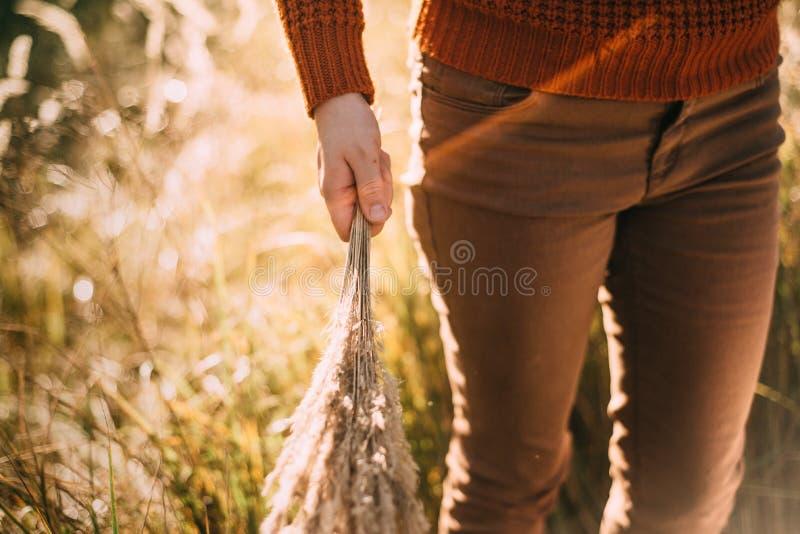 A mulher está guardando o ramalhete da grama no campo imagem de stock royalty free