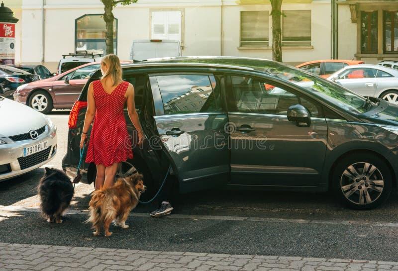 Mulher francesa com os cães que entram no carro fotografia de stock